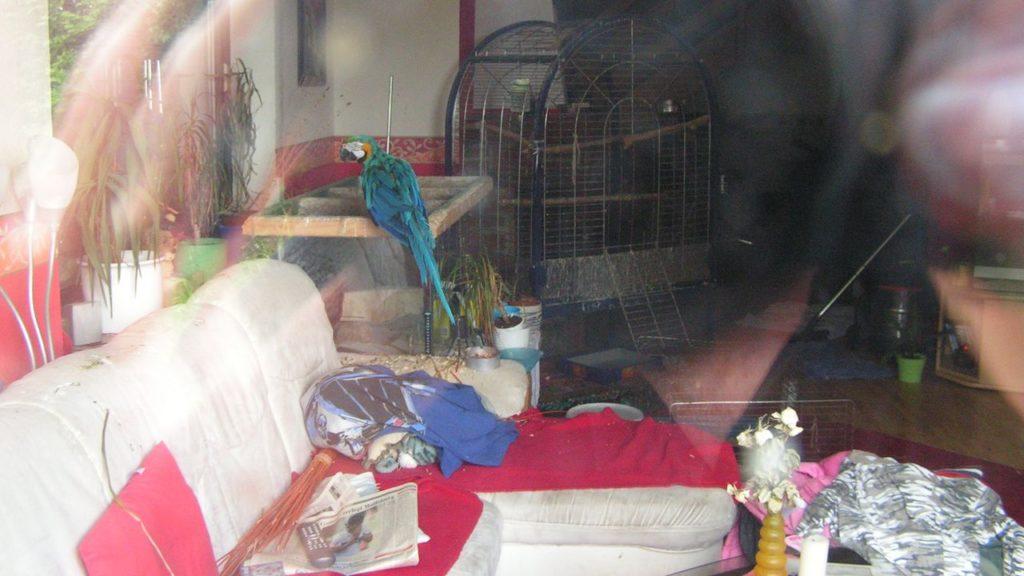 Hier muss eingegriffen werden: verwahrloste Papageien