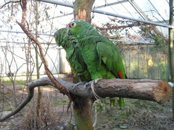 Spätsommer 2004: die ersten Papageien ziehen ein