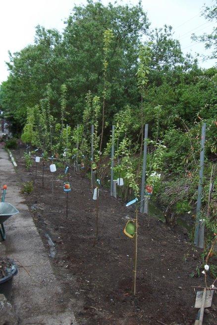 im Außenbereich werden Obstbäume gepflanzt