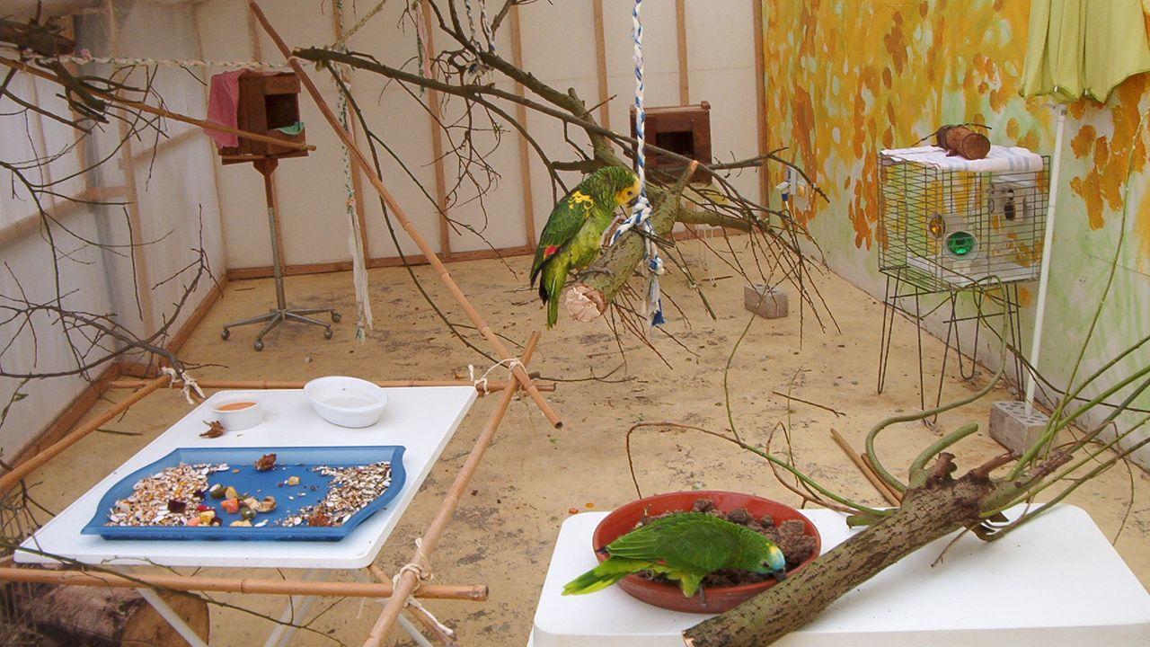 2004: Amazona-Papageien im Krankenraum