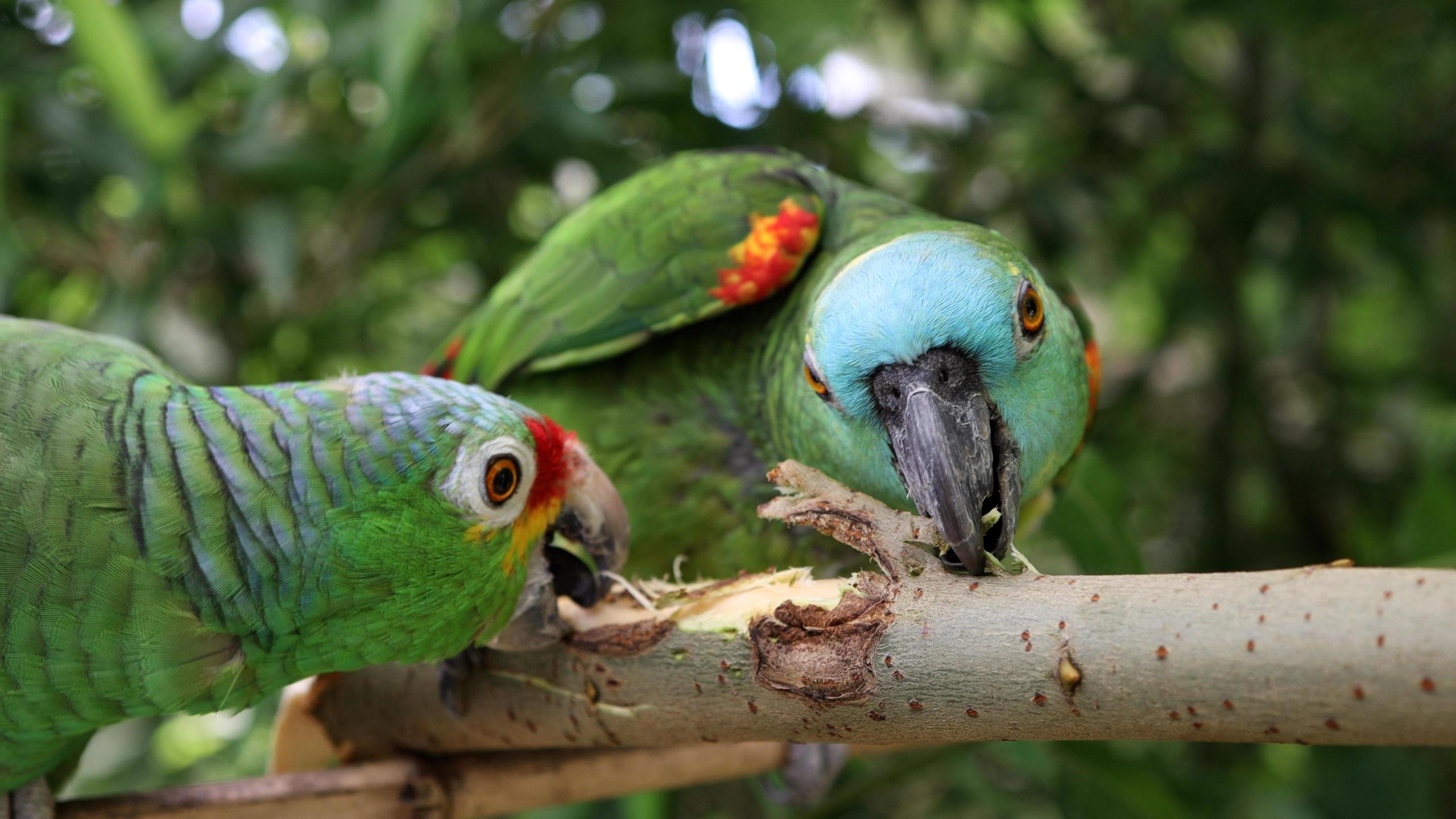 Happy: Papageienschnabel im Einsatz