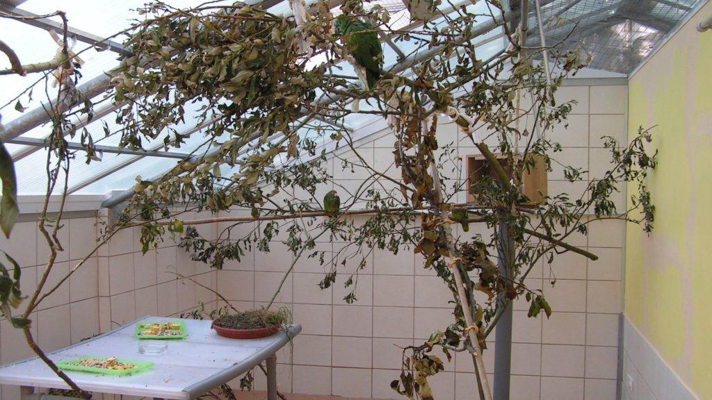 Tisch mit Futtertabletts und Erdschale, Nistkasten, Äste und Bambusstangen