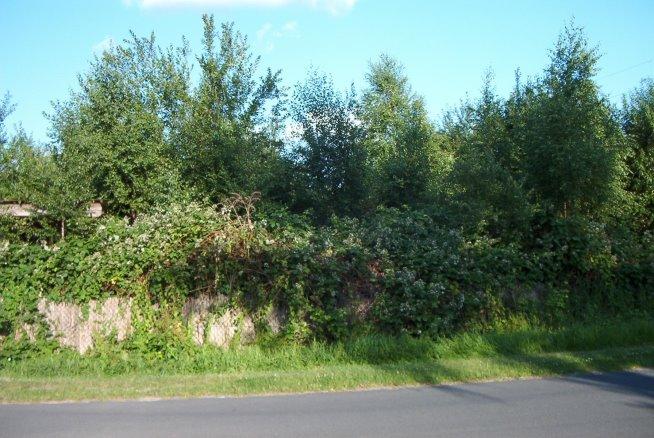 die Gärtnerei – verborgen im grünen Dickicht