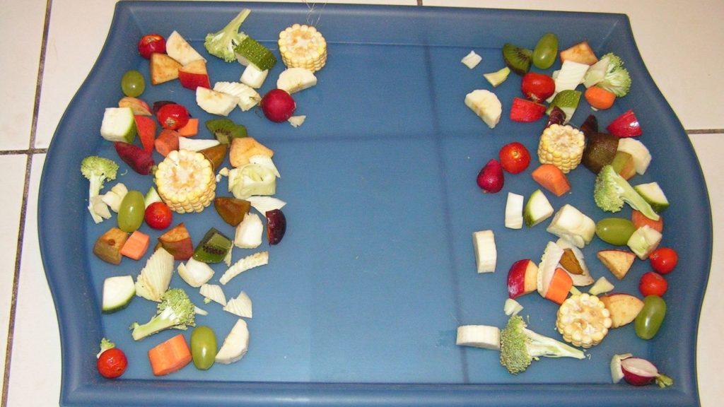 Futterzubereitung: Futtertablett mit Obst und Gemüse