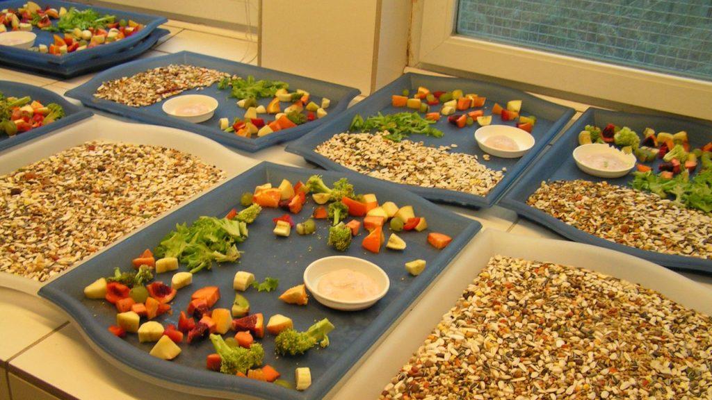 Futterzubereitung: Futtertabletts – gefüllt mit Körnern, Obst und Gemüse
