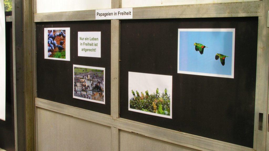 Besucherzone: Fotos von Papageien in Freiheit