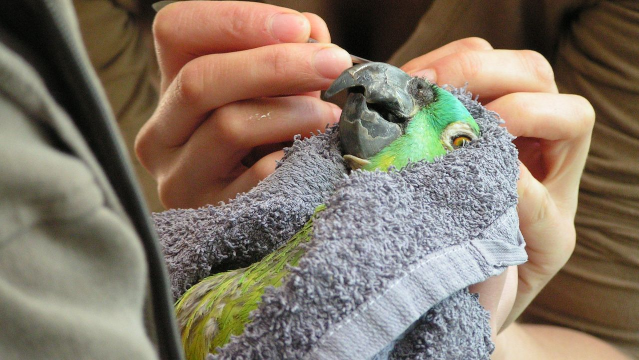 Pflege der Papageien