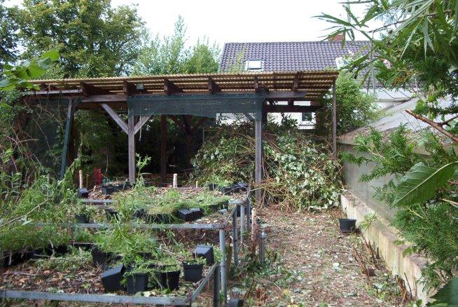 Die Gärtnerei wird langsam freigelegt