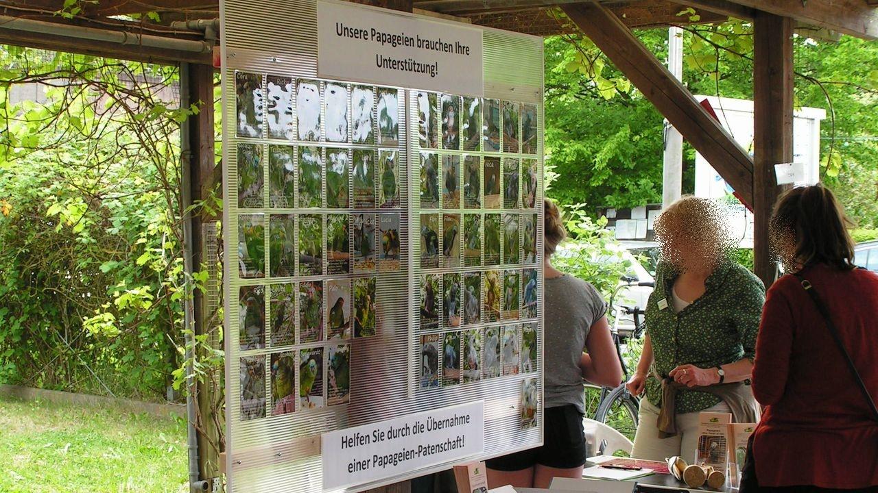 Pergola: Aufruf zur Unterstützung durch Papageien-Patenschaften