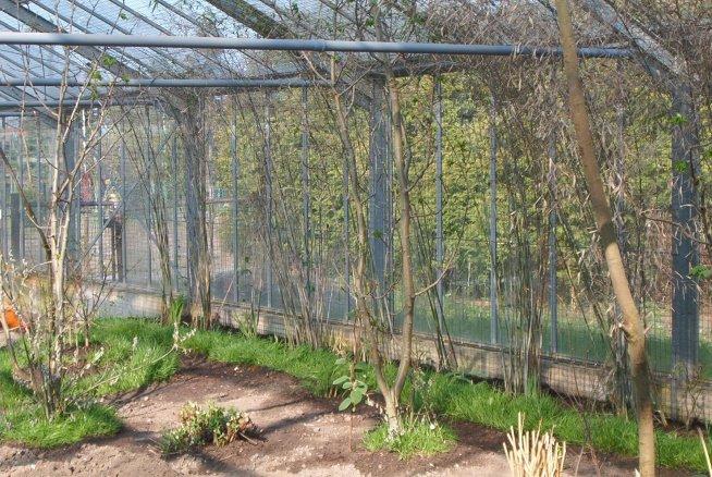die Seiten werden mit Gras, Bäumen und Bambus bepflanzt