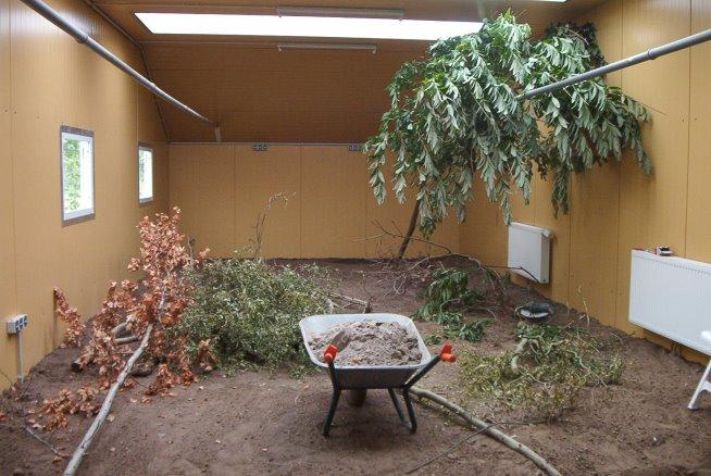 Bäume und Äste zur Ausgestaltung der Schutzhäuser