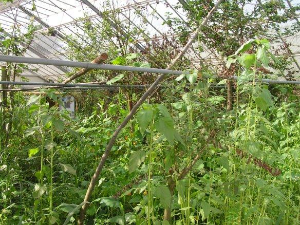 in den Flughallen wächst die Bepflanzung schnell