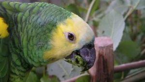 Papageien mögen Weidenrinde