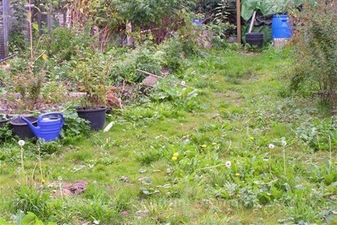 Sommer 2014: Die Fläche, die zum Garten werden soll.