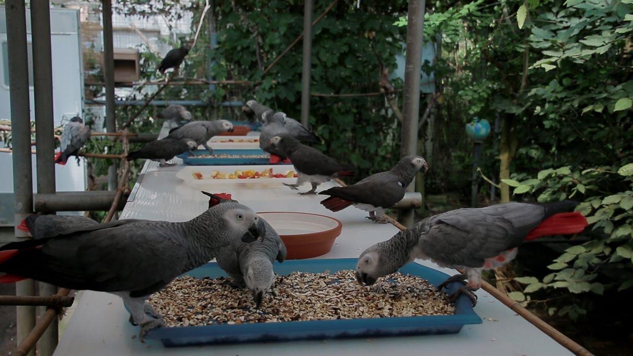 Papageien an den Futtertischen
