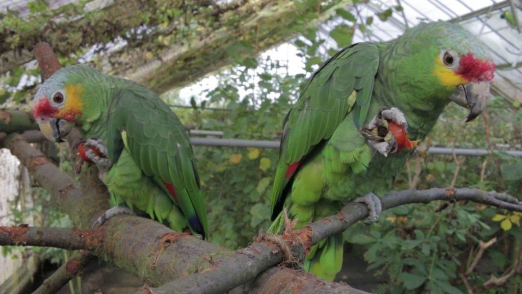 Futter in den Bäumen