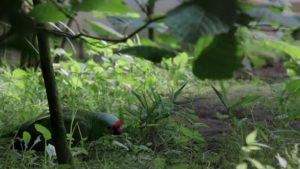 Im Sommer: Papageien kühlen sich am Boden