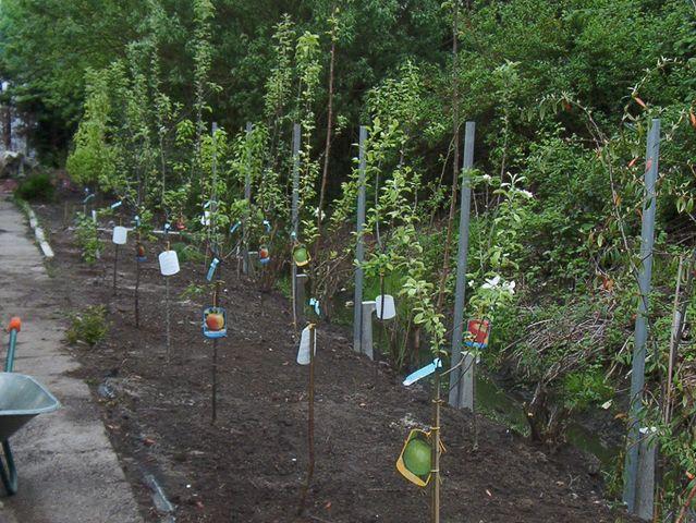 Frühjahr 2005: Obstbäume werden gepflanzt.