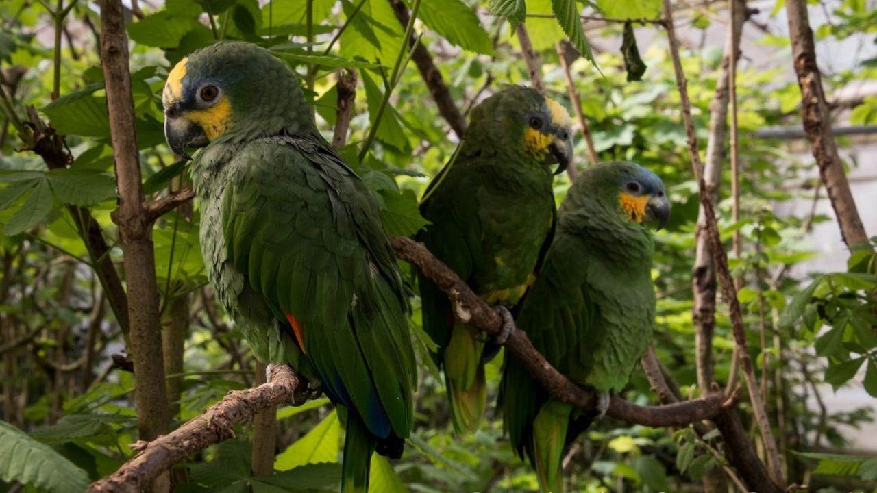 Unsere Papageien